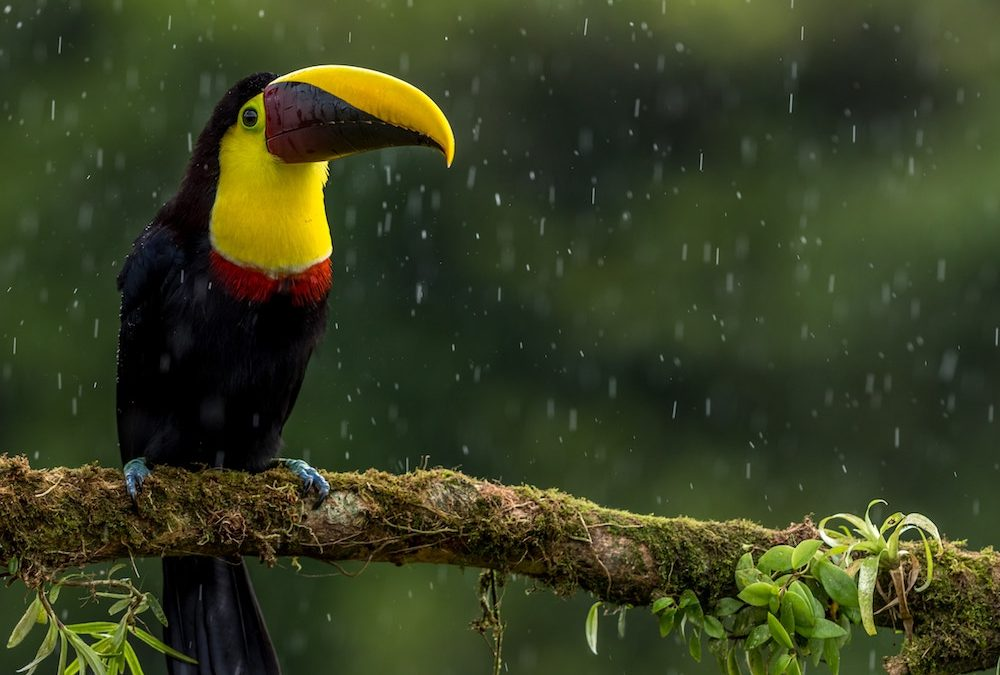 toucan in the rain - Belize real estate agent Belize real estate lawyer